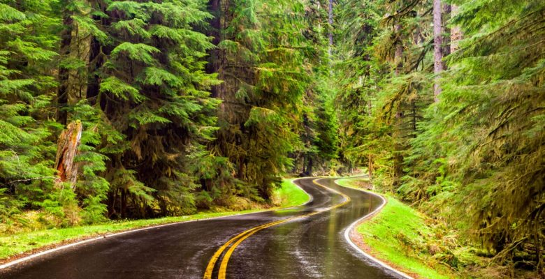 windy road in green forest after rain