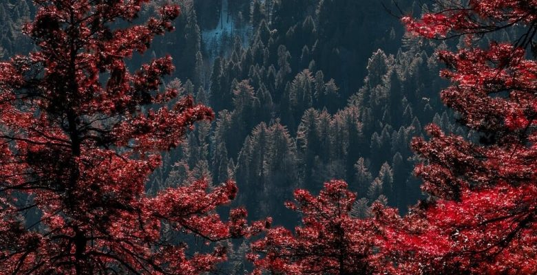 Red and green trees near mountain during daytime