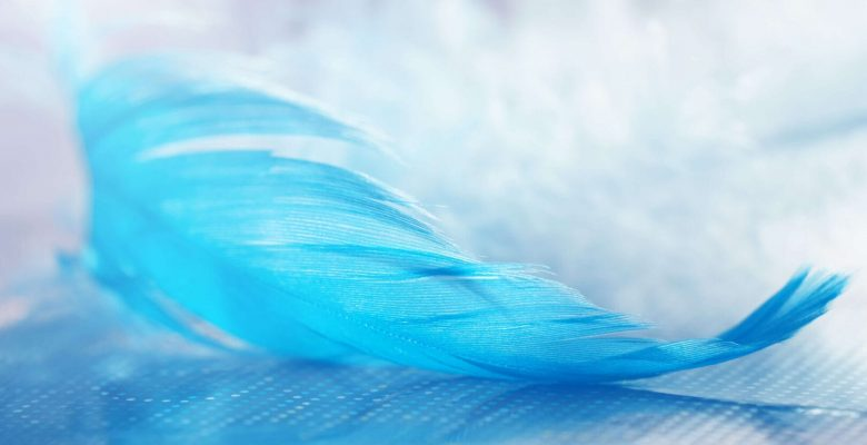 blue feather resting on surface