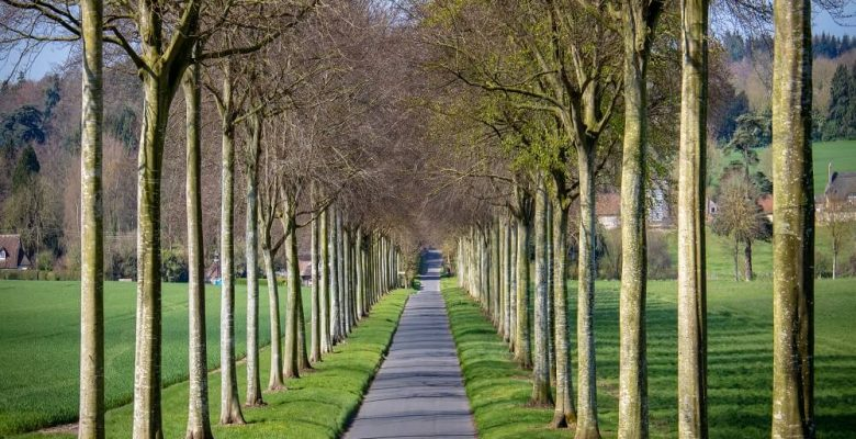 Grey concrete road near tall and green trees